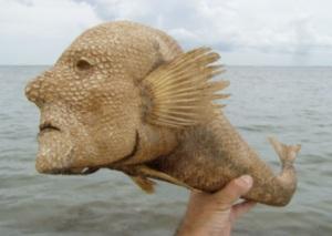 Lorefish